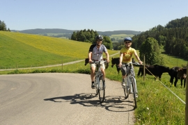 Cycling Tour Baden with bike